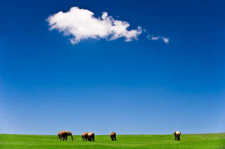 exploratory: wild elephants on grass with blue sky and a cloud