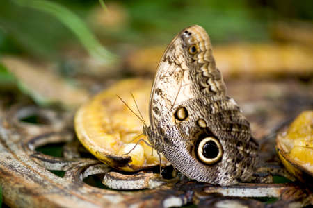 vividly: butterfly eating on a fruit