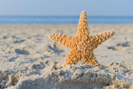 ferien: Seestern steckt im Sand am Strand mit blauem Himmel