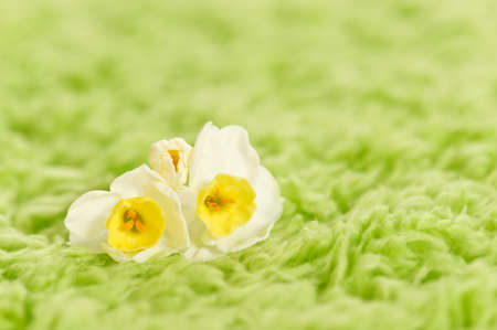moulder: little white and yellow flowers on grass Stock Photo