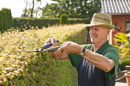 sun care: man cutting a hedge in a garden, summer time Stock Photo
