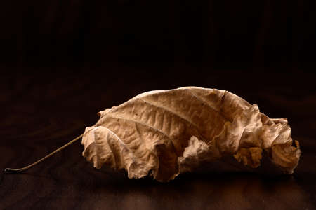 stil: a dried leave on dark background