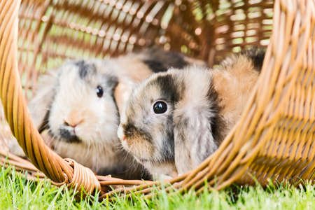 two rabbits sitting in a basket outside in the garden Stock Photo