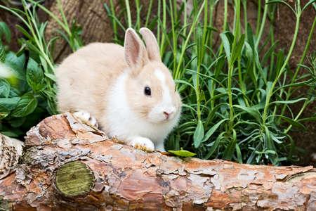 little rabbit sitting on a tree trunk in the garden