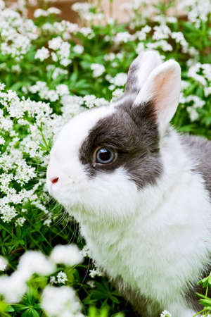countryside loving: a young black and white rabbit sitting in the garden between sweet woodruff
