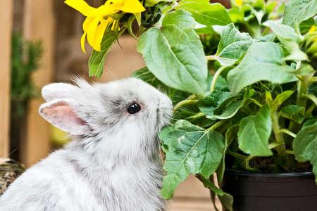 rabbit feeding on herbs in the garden