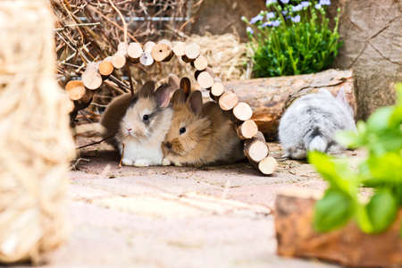 crouch: two little rabbits hiding in the garden in the garden