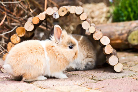 pygmy: two little rabbits hiding in the garden in the garden