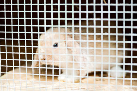 baby rabbit with floppy ears in a stall Stock Photo