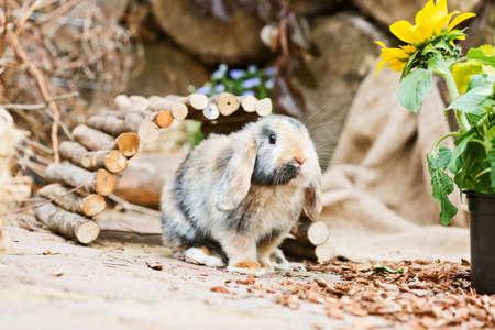enclosure: little rabbit inside a enclosure in the garden