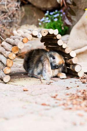 hideout: little rabbit hiding under a hideout in the garden Stock Photo