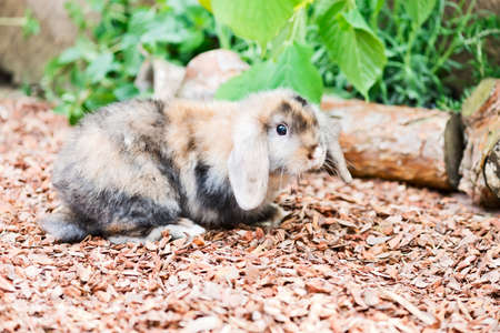 little rabbit inside a enclosure in the garden