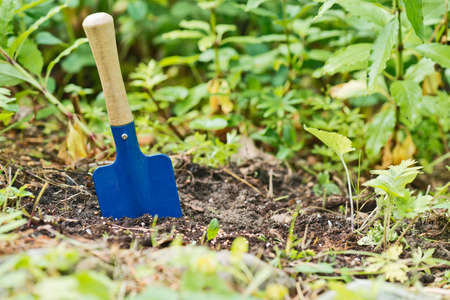 seed bed: a blue shovel in the garden with seeds Stock Photo