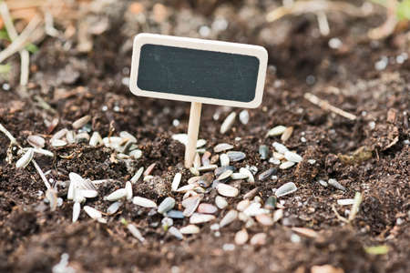 seed bed: garden soil with a label for planting