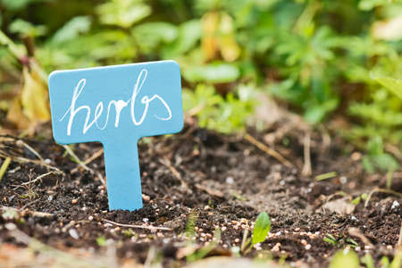 seed bed: garden soil with a lable saying herbs