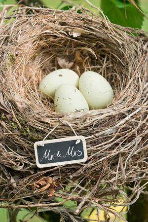 mrs: nido de un p�jaro con tres huevos y un letrero que dec�a Mr. & Mrs. en un �rbol en el jard�n