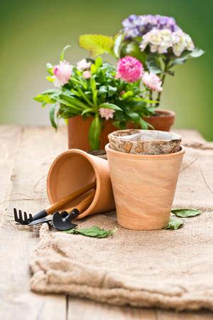 flores moradas: flores en macetas con herramientas de jard�n en una mesa con el fondo verde
