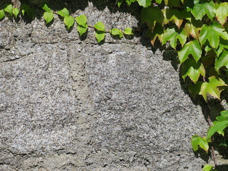 rockwall: stone wall with leaves