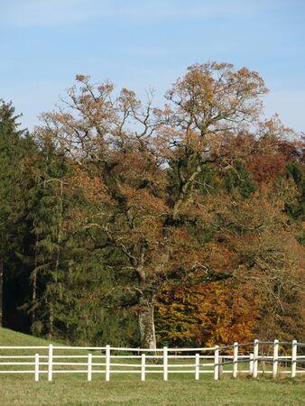 demarcation: white fence wood