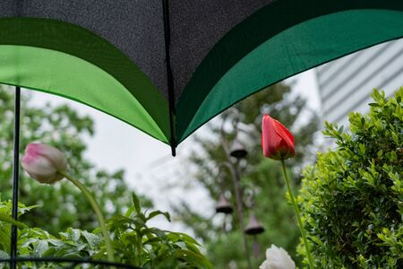 Colorful protection with umbrella. concept, Weather protection; Flowering plant, saisonal; springtime
