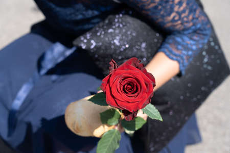 Red Rose and piece of bread in hand of a kneeling young girl, in dark blue glittering dress after school graduation at Jugendfest Brugg. Close up of red rose. Banque d'images