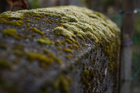 Frozen moss in foreground on bricked garden posts on morning sun. Selective focus. Stock fotó