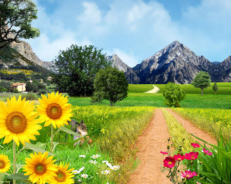 country road with sunflowers Stock Photo