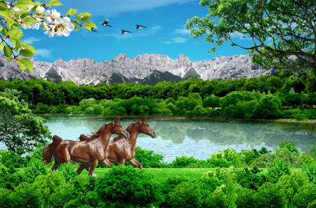 Park with horses Stock Photo