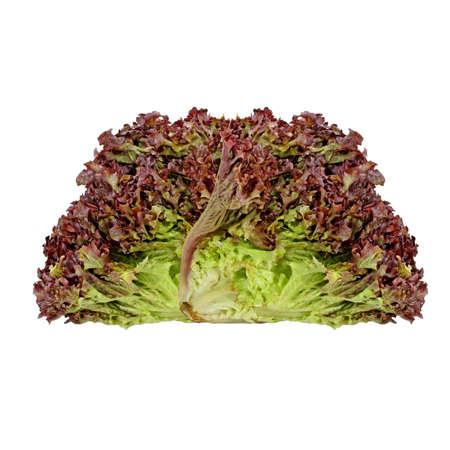 endive: Red endive salad