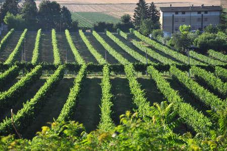 Wine-growing hills of Umbria