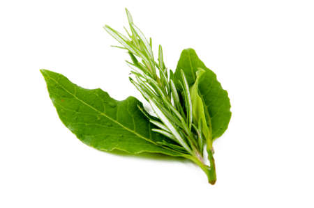 laurel and rosemary on a white background to prepare condiments Stock Photo