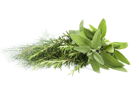 garnishing: mik fennel, rosemary and sage for seasoning food on white background