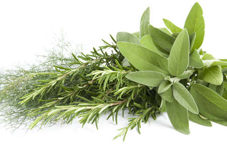 mik fennel, rosemary and sage for seasoning food on white background