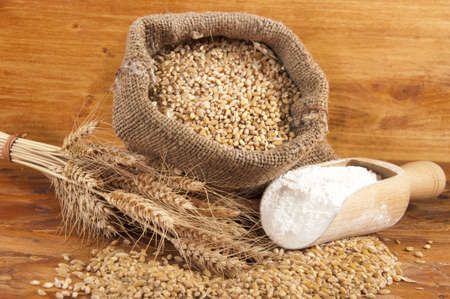 sheaf of wheat dried with colored background
