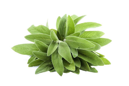 bunch of sage on a white background