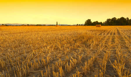 healty: Wheat field harvested with hay bales at sunset - Sezzadio - Alessandria - Italy