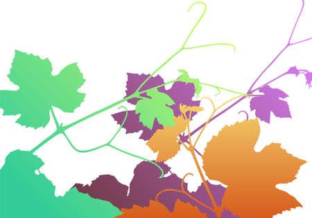 vitis: Vine leaves