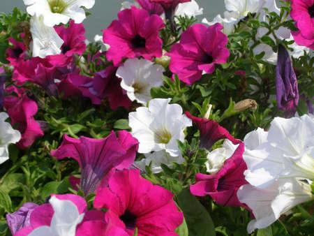 floreal: Flower