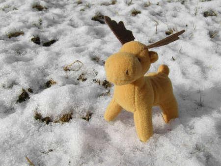 Christmas deer in real snow photo