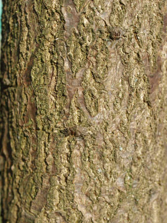 Detail of section of a tree trunk photo