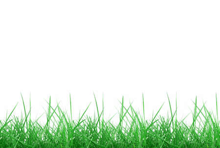 Green meadow grass over white background with copy space