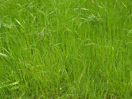 Green grass meadow lawn useful as a background Stock Photo - 7000749