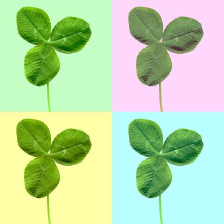 three leafed: Pop art style collage of Shamrock three leafed clover trifolium plant Stock Photo