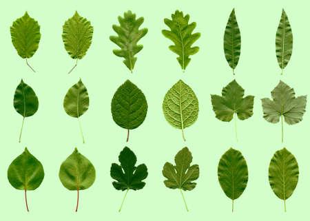 bladeren: Boom laat collage - voor- en achterkant - over groen