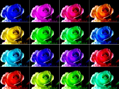 Pop art style collage of coloured roses photo