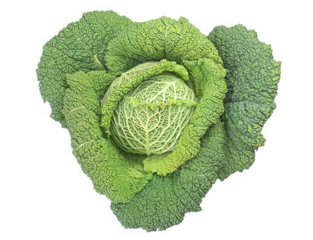 edible leaves: Cabbage leafy vegetable plant with edible leaves - isolated over white background