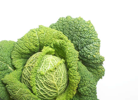 edible leaves: Cabbage leafy vegetable plant with edible leaves - copy space
