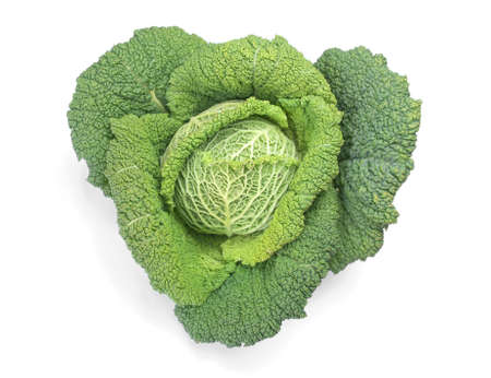 edible leaves: Cabbage leafy vegetable plant with edible leaves - over white with soft shadow