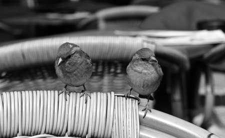 ruise�or: Com�n Nightingale Luscinia megarhynchos p�jaro lepida Foto de archivo