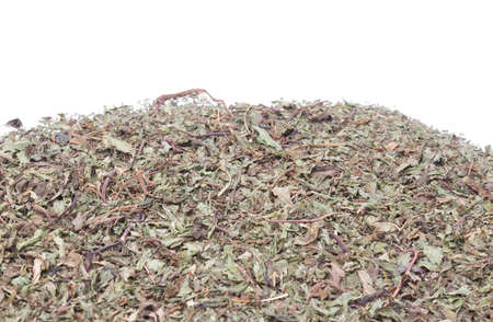 mentha: Detail of dried peppermint leaves (Mentha Piperita) Stock Photo